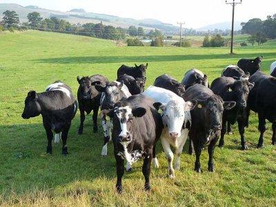 Linux no ordenhamento de vacas